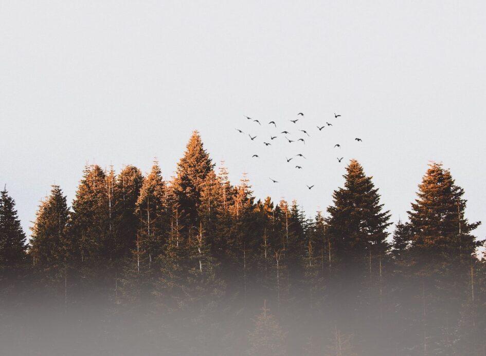 natură și bunăstarea mintală